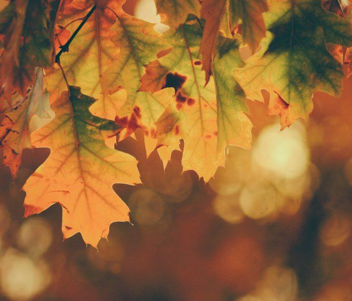Ayurveda im Herbst & Winter: 5 Tipps
