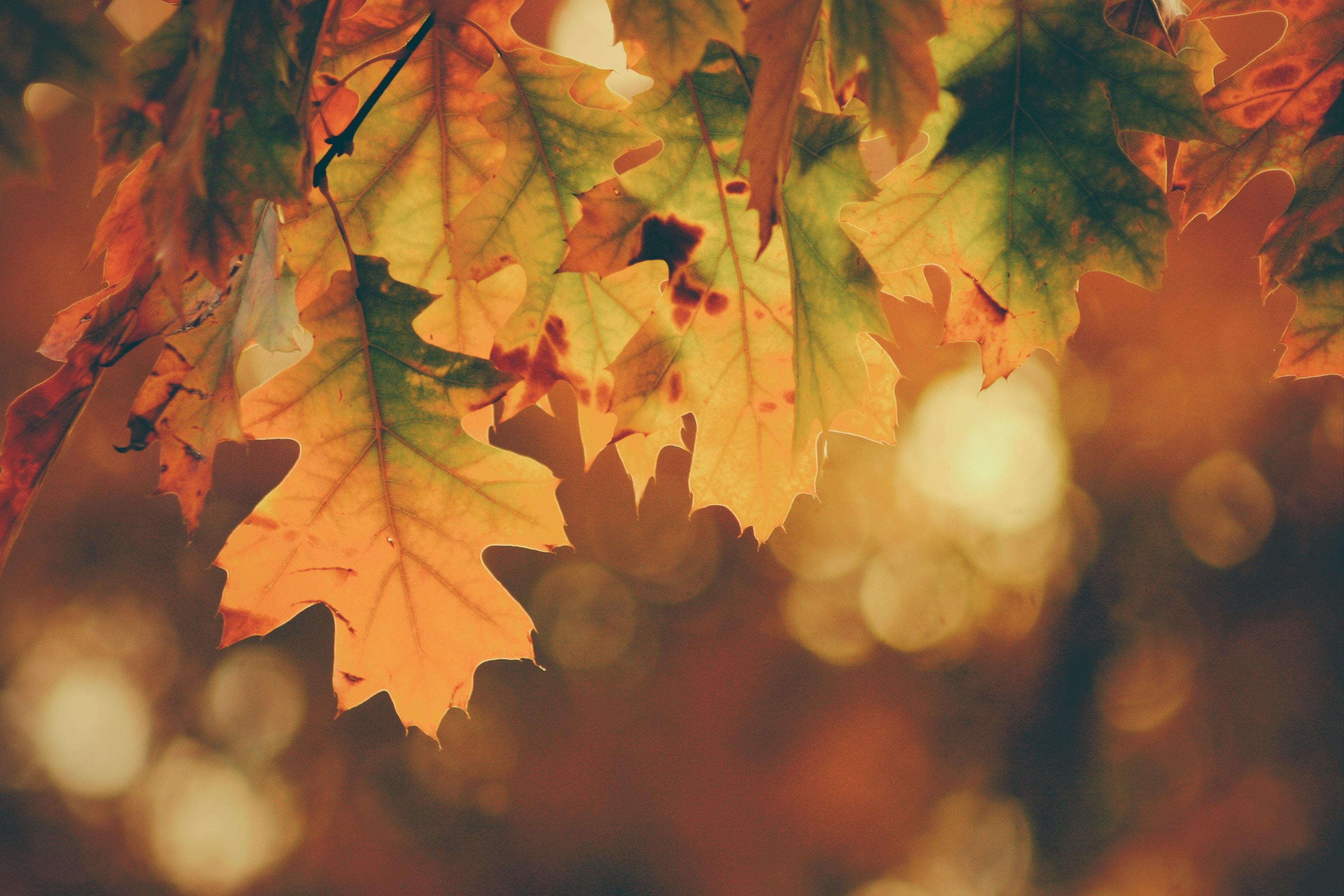Ayurveda_Herbst
